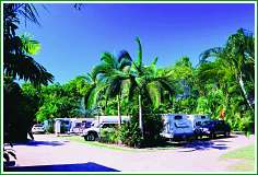 Tropical Hibiscus Caravan Park - Whitsundays Accommodation