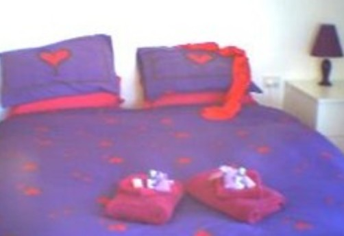 Aloomba Lavender - Accommodation - Whitsundays Accommodation
