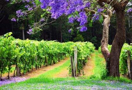Bago Vineyards - Whitsundays Accommodation