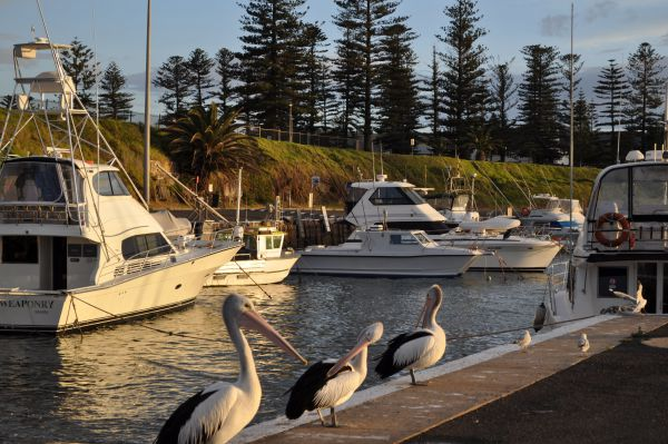 Nautica Accommodation Gerringong - Whitsundays Accommodation
