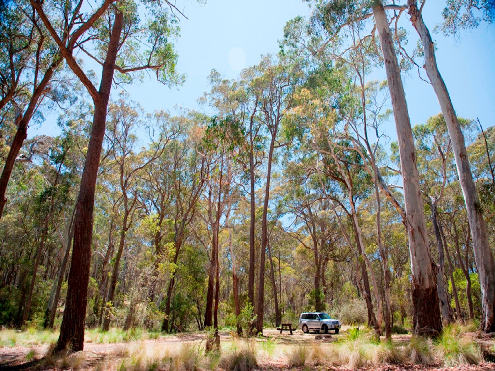 Coolah Tops National Park Camping - Whitsundays Accommodation